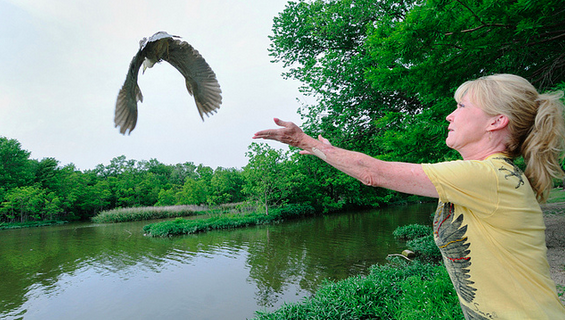 Kathy Rogers after a White Rock Lake bird rescue: Photo by Robert Bunch