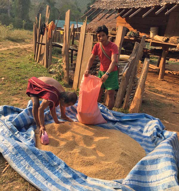 Gathering rice into sacks