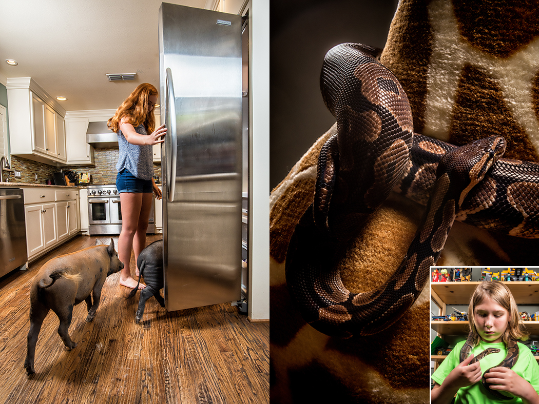From left: Pigs come running when Haley Ephraim opens the fridge; Hayden Ephraim gets cozy with his pet snake, Mr. Cuddles the python. (Photos by Danny Fulgencio)