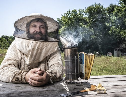 Lessons we can learn from the honeybees