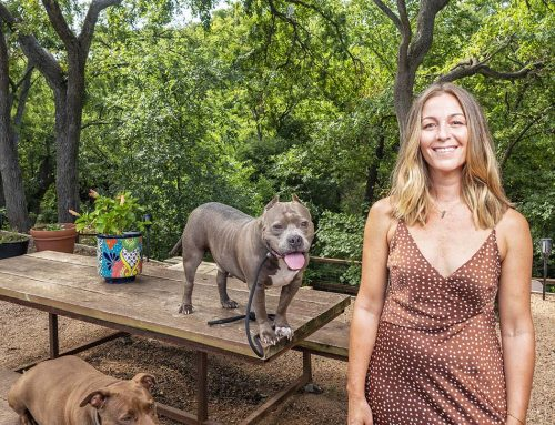 Pit bull savior, accessory maker: Aften Bell runs The Love Pit Dog Rescue