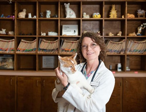 Cattitude adjustment: Dr. Raina Welden is the ultimate cat lady