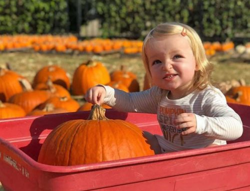 Pumpkin patch: St. James rolls out family tradition